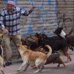 Aumentó los ataques de animales en Yopal