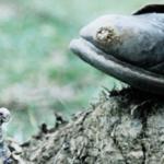 Soldado fue víctima de mina antipersona en Arauca