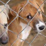 Alcaldía de Yopal realiza campaña de donación de alimentos e insumos para mascotas