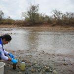 Corporinoquia investiga muerte de alevinos en el caño Usivar