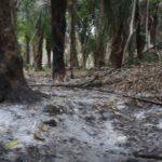 Grave daño ambiental deja posible urbanización ilegal en Yopal