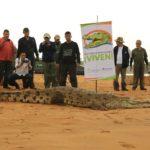 Autoridades rescataron babillas en zona rural de Villavicencio