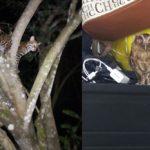 Villavicencio: mujer pide que le saquen el pájaro de la habitación