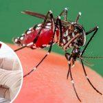Se encienden las alarmas por caso de dengue en Yopal