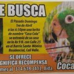 Ofrecen un millón de pesos por Coca-Cola, una lora perdida en Cali