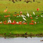 Producto 100% Casanareño: Estrategia para un departamento turístico