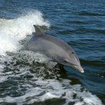 Los drones, una herramienta para preservar los delfines en el Amazonas