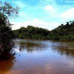 Cocodrilos vuelven al río Guarrojo