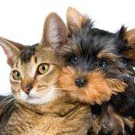 Más de 80 perros y gatos fueron esterilizados en Yopal